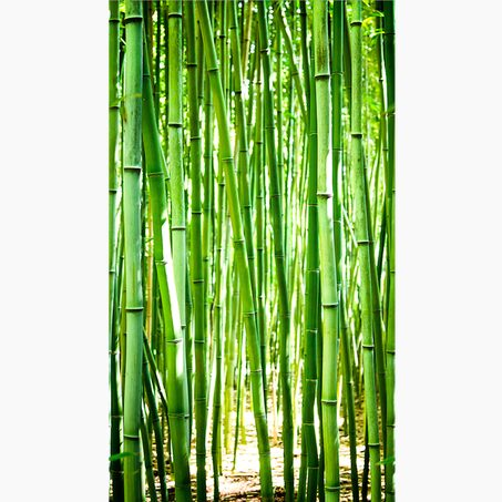 Décor mural panoramique L BAMBOO 159 x 280 cm